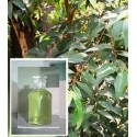Eucalyptus Oil Yellow